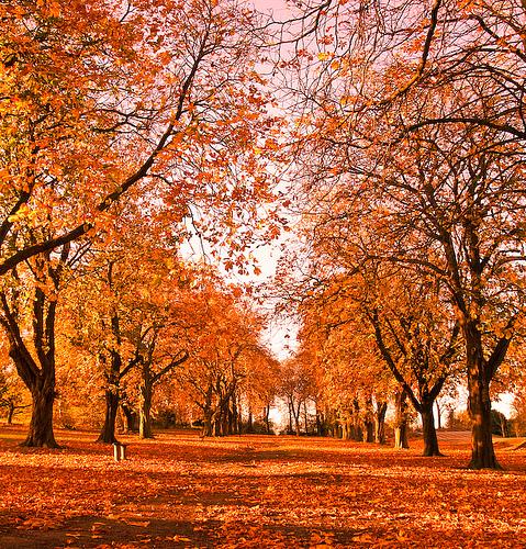 http://brucefong.files.wordpress.com/2008/10/autumn-trees.jpg