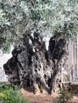 Israel 2014 IFL 338