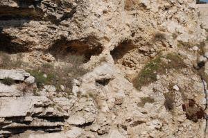Israel 2008 445
